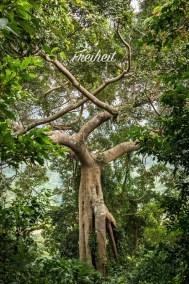 Ein richtig toller großer Baum