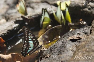 Süßes Schmetterlings-Wasser-Loch ;)