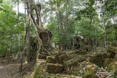 ...na diesen beeindruckenden Baumstamm ;-)