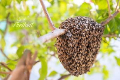Neuer Bienenstock direkt neben unserem Eingang
