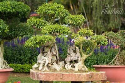 Miniriesenbaum