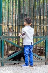 Botanischer Garten - auch Affen sind im Käfig