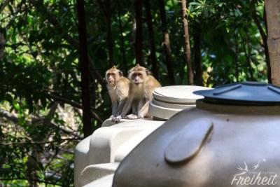 Affen auf Wassertanks
