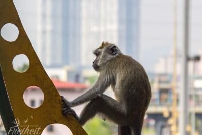 Planet der Affen?