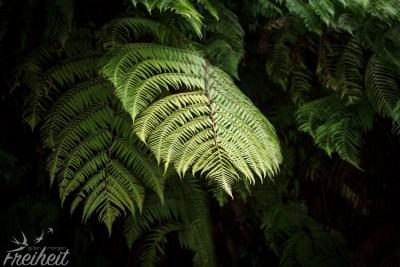 Dschungelausflug