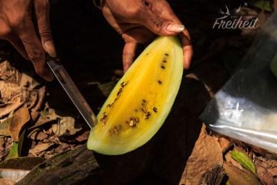 Süße Melone