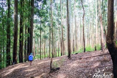 Abstieg durch diesen schönen Waldabschnitt