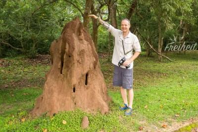 Termitenbau XXL