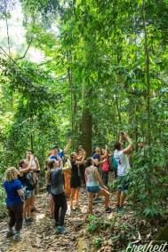 Alle wollen sie sehen - die Orang Utans. Zum Glück waren wir später wieder alleine..