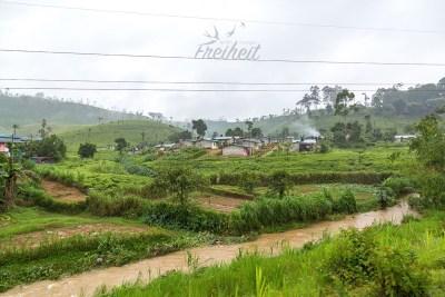Die ersten Teeplantagen im Hochland