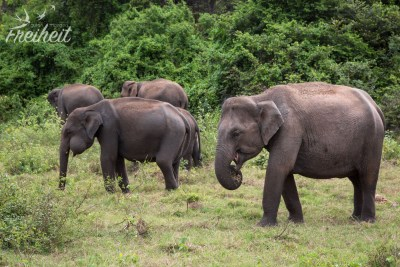 Die erste Elefantengruppe