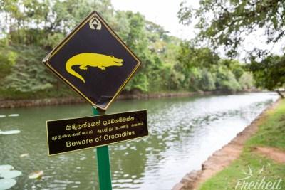 Vorsicht vor den Krokodilen