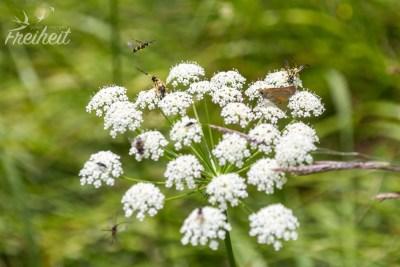 Allein auf dieser Blume zählen wir 10 Insekten!