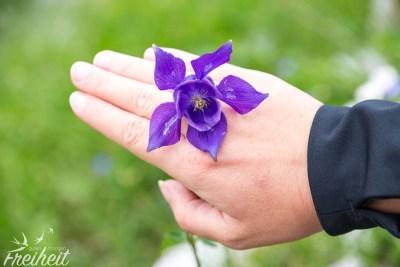 Herrliche bunte Blumenwelt