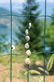 An Zäunen und im Gebüsch sehen wir immer wieder jede Menge Schnecken - übrigens in ganz Bosnien, nicht nur hier