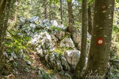 Schöne Etappe durch den Wald