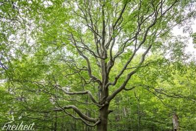 Schicke Bäume