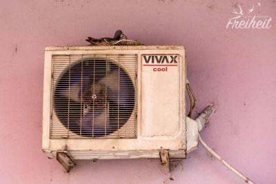 Nistende Taube auf einem Klimaanlagenkondensator
