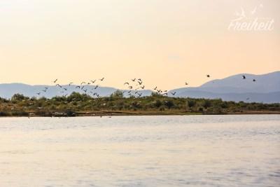 Der Skutari See ist für viele Vögel ein Überwinterungsplatz