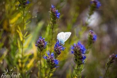 Während unserer Rast flattern viele hübsche Schmetterlinge um uns herum
