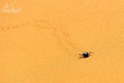 Und auch Käfer krabbeln immer wieder über den Sand