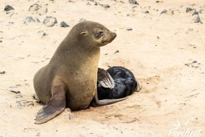 Mutter und Junges vereint
