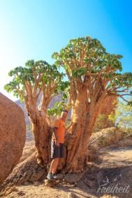 In Namibia wachsen so viele faszinierende Bäume