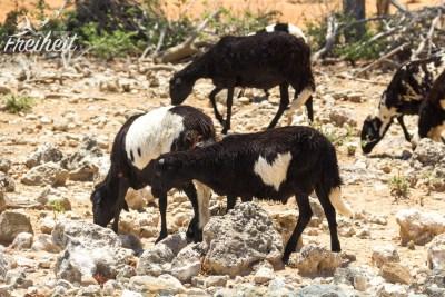 Ein Herz für Schafe