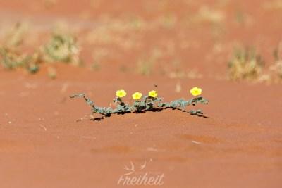 Blumen in der Wüste! Mit Biene! :)