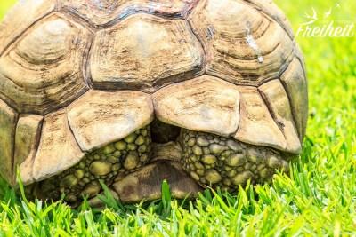 ...Schildkröten...