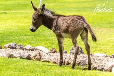 Esel und Antilopen tummeln sich hier ebenfalls