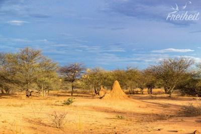 Gegenüber des Waterberg liegen die Ausläufer der Kalahari Wüste