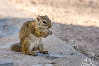 Am Campingplatz ein Hörnchen :)