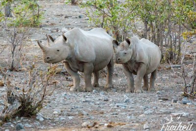 Nashornmama und ihr Junges