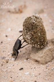 Starke Käfer!