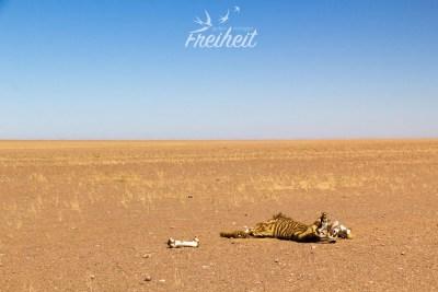 Die Sonne kommt raus und offenbart uns auch die Gnadenlosigkeit der Wüste