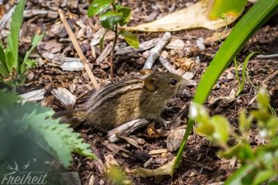 Eine versteckte Maus :)