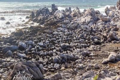 Hunderte Meeresvögel