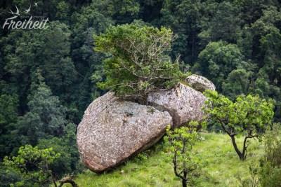 """Sensation: Baum spaltet Felsen!"" ;-) :-P"
