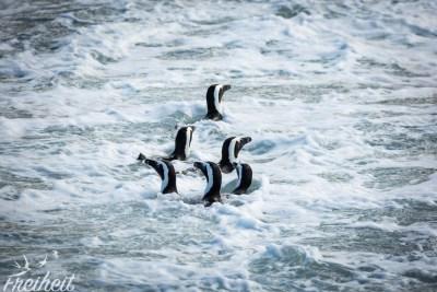 Formationsschwimmen :D