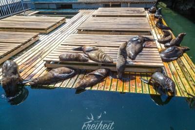 Das Sonnendeck der Seehunde :)