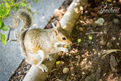 Besuch im Companys Garden von sehr hungrigen Hörnchen :)