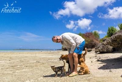 Anhängliche Hunde und Katzen ;-)