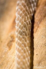 Abgeworfene Schlangenhaut