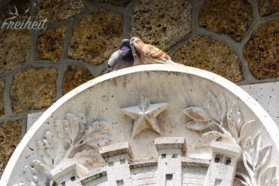 Turteltauben am Sacré-Cœur
