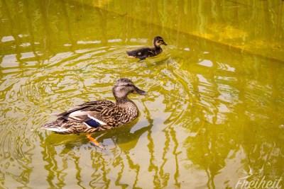 Kurze Rast an einem kleinen Teich vor dem Museum Quai Branly