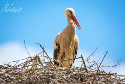 Im Süden von Portugal haben wir oft Störche und ihre Nester gesehen :D