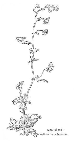 Field Book of Western Wildflowers, by Margaret Armstrong