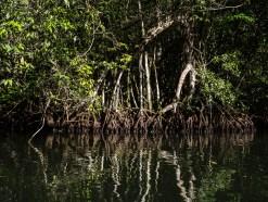 Der Rio Dulce mit seiner ganzen Uferpracht.