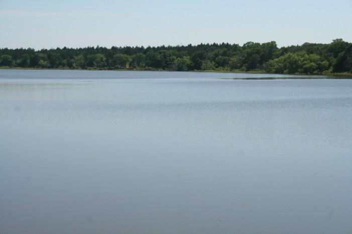 Park Board seeking volunteers to help sink cedar trees at Liberty Lake